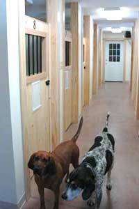 Dogs in hallway
