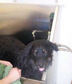 Do it yourself dog wash at mountain view pet resort do it yourself dog wash with ramp wet but clean dog solutioingenieria Gallery
